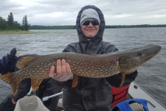 "Brody Williams 32"" Northern Released June 15th"