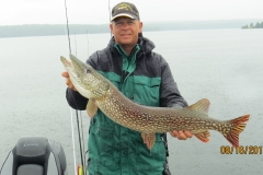 """Tim Wuethrich 39"""" Northern Released Aug 16th"""