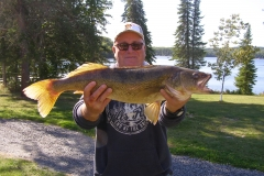 "Dave Kohrt 28"" Walleye Mounted"