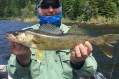 "Jordon Hansen 21"" Walleye released June 16th"