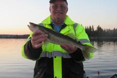 """Steve Taylor 20"""" Walleye Released"""