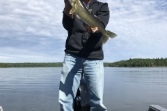 Rob Roose Walleye Released