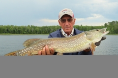 "Glen Grooter 34"" Northern Released July 30th"